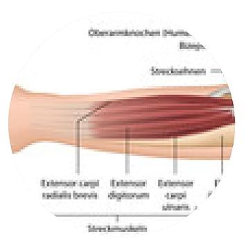 my-puzzle-design Mousepad Muskeln Unterarm, Anatomie: Amazon.de ...
