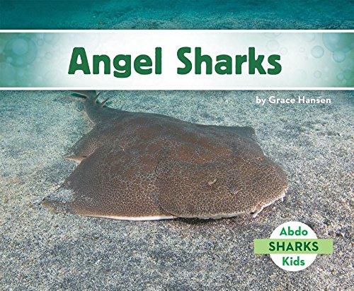 Angel Sharks (Sharks Set 2) (Shark Angels compare prices)
