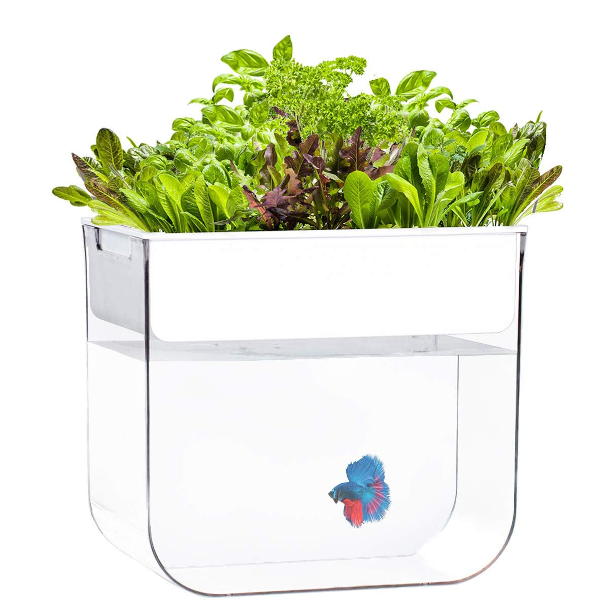 Joyfay Aquaponic Fish Tank- Betta Fish Tank, 3.2 Gallon, Hydroponic Cleaning Tank, Fish Feeds The Plants and The Plants Clean The Tank by Joyfay
