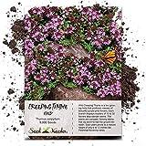 Seed Needs, Wild Creeping Thyme (Thymus serpyllum) 5,000 Seeds