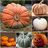 Package of 50 Seeds, Spooky Pumpkin Mixture - Best Reviews Guide