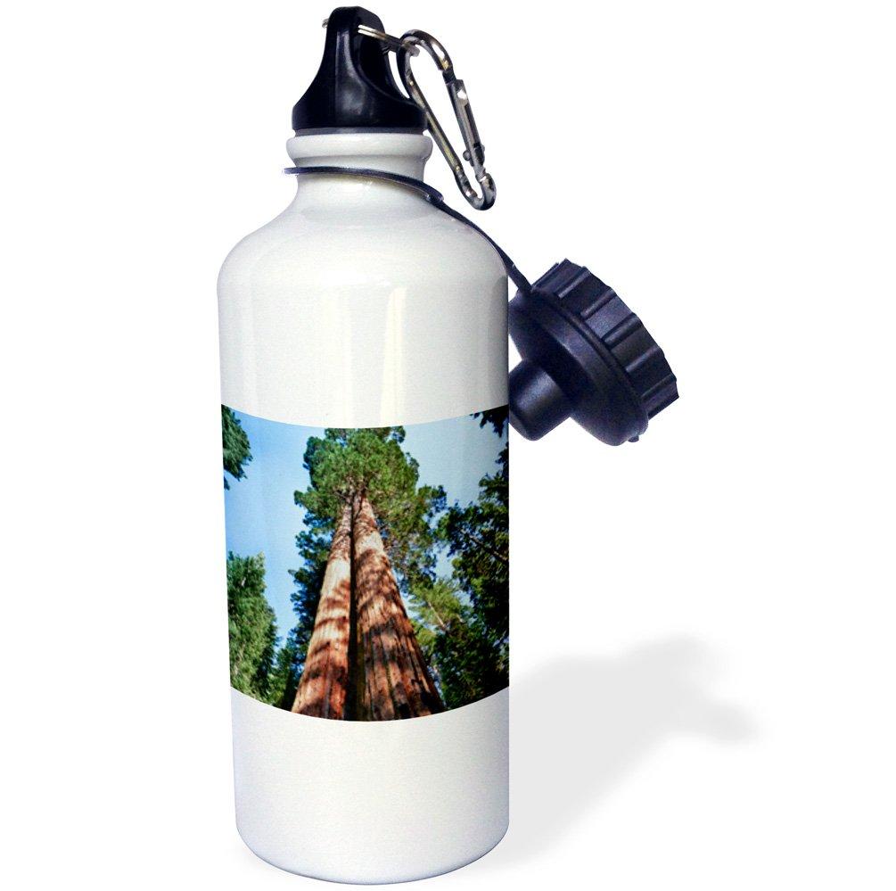 USA-US05 MWI0013-Mark Williford Sports Water Bottle 21 oz Yosemite 3dRose wb/_142811/_1Woman White USA-US05 MWI0013-Mark Williford Sports Water Bottle Sequoia Tree California