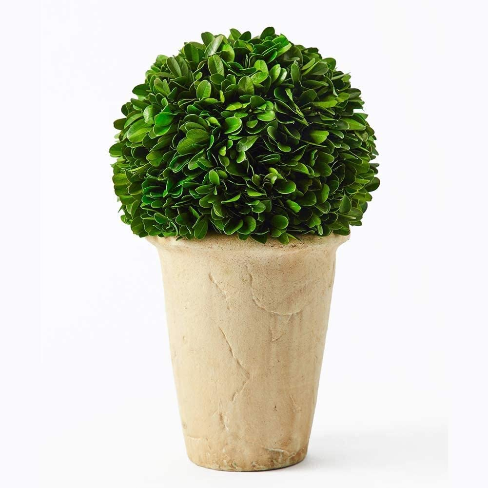 Boxwoodworld preserved boxwood green plant for home decor classic ball on pot design 10 inch hight (boxwood leaves)