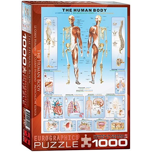 Eurographics corps humain puzzle (1000pièces)