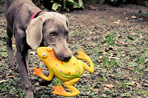 Picture of Large Squeaky Frog Dog Toys. 100% Natural Rubber (Latex). Complies to Same Safety Standards as Children's Toys. Soft & Squeaky. Best Dog Toy for Large Dog.