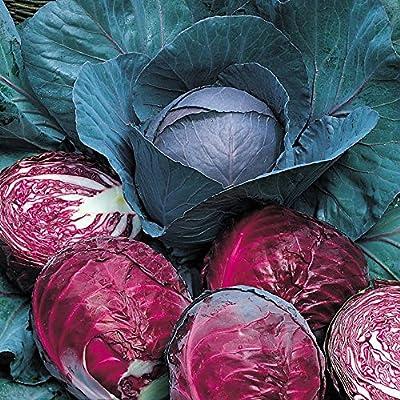 Red Drumhead Cabbage 150 Seeds - Heirloom - Veggie