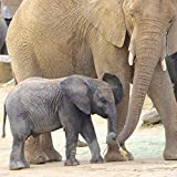 African Elephants Square Photographic Print Mother and Baby Animal Photo Unframed Nursery Wall Art Tan Grey 5x5 8x8 10x10 12x12 16x16 20x20 24x24