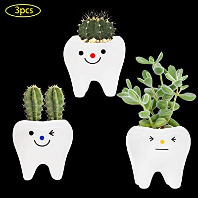 3 Pack White Ceramic Succulent Planter Pot, Tooth Shape Cactus Bonsai Planter Container for Indoor/Outdoor Garden Home Office Decoration : Garden & Outdoor