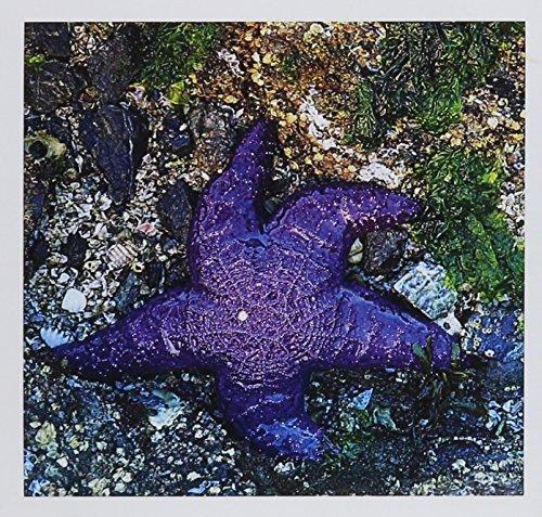 USA, Washington, Orcas Island, Purple Star, Starfish  - Greeting Card, 6 x 6 inches, single (gc_189892_5)