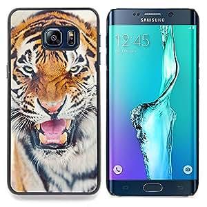 - Tiger Roar Angry Cat Big Animal Africa/ Duro Snap en el tel????fono celular de la cubierta - Cao - For Samsung Galaxy S6 Edge Plus