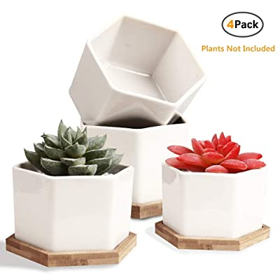 Succulent Pots, OAMCEG 4 Inch Succulent Planters, Set of 4 White Ceramic Succulent Cactus Plant Pots with Bamboo Tray(Plants NOT Included) : Garden & Outdoor