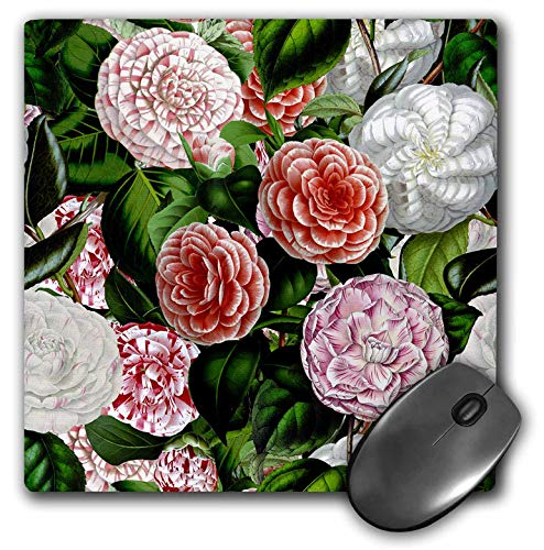 3dRose Uta Naumann Watercolor Pattern - Vintage Victorian Flower Pattern - Pink and White Camellia Flowers - Mousepad (mp_293219_1)