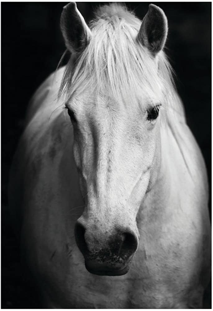 Amazon Com White Horse S Black And White Art Portrait Poster 13 X 19in Clothing