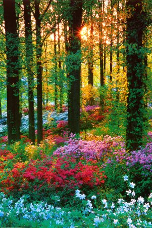 Flower Forest Poster Print, 24x36 Collections Poster Print,