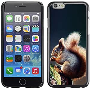 "Exotic-Star Snap On Hard Protective Case For 5.5"" iPhone 6 Plus ( Cool Squirrel )"