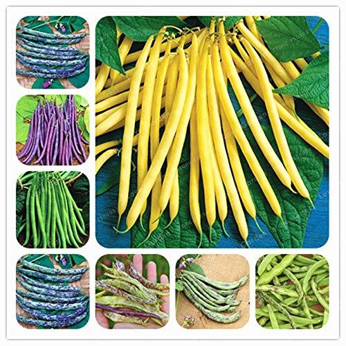AGROBITS 10 Unids/bolsa Phaseolus Vulgaris Bonsai Frijol Vegetal Bonsai Planta de Crecimiento Natural de Alubias Verdes Para...