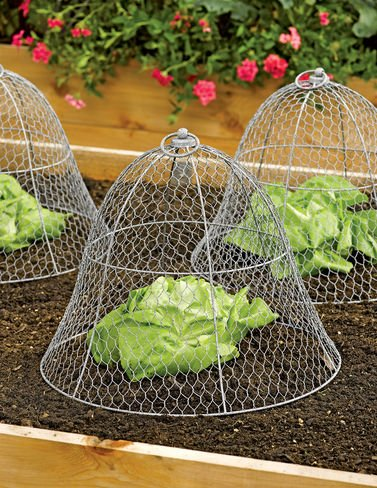 Gardeneru0027s Supply Company Chicken Wire Cloche
