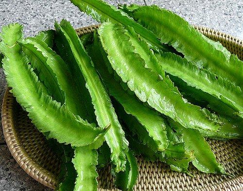 50 Asian Heirloom Winged Bean Seed by Stonysoil Seed Company ...dau rang