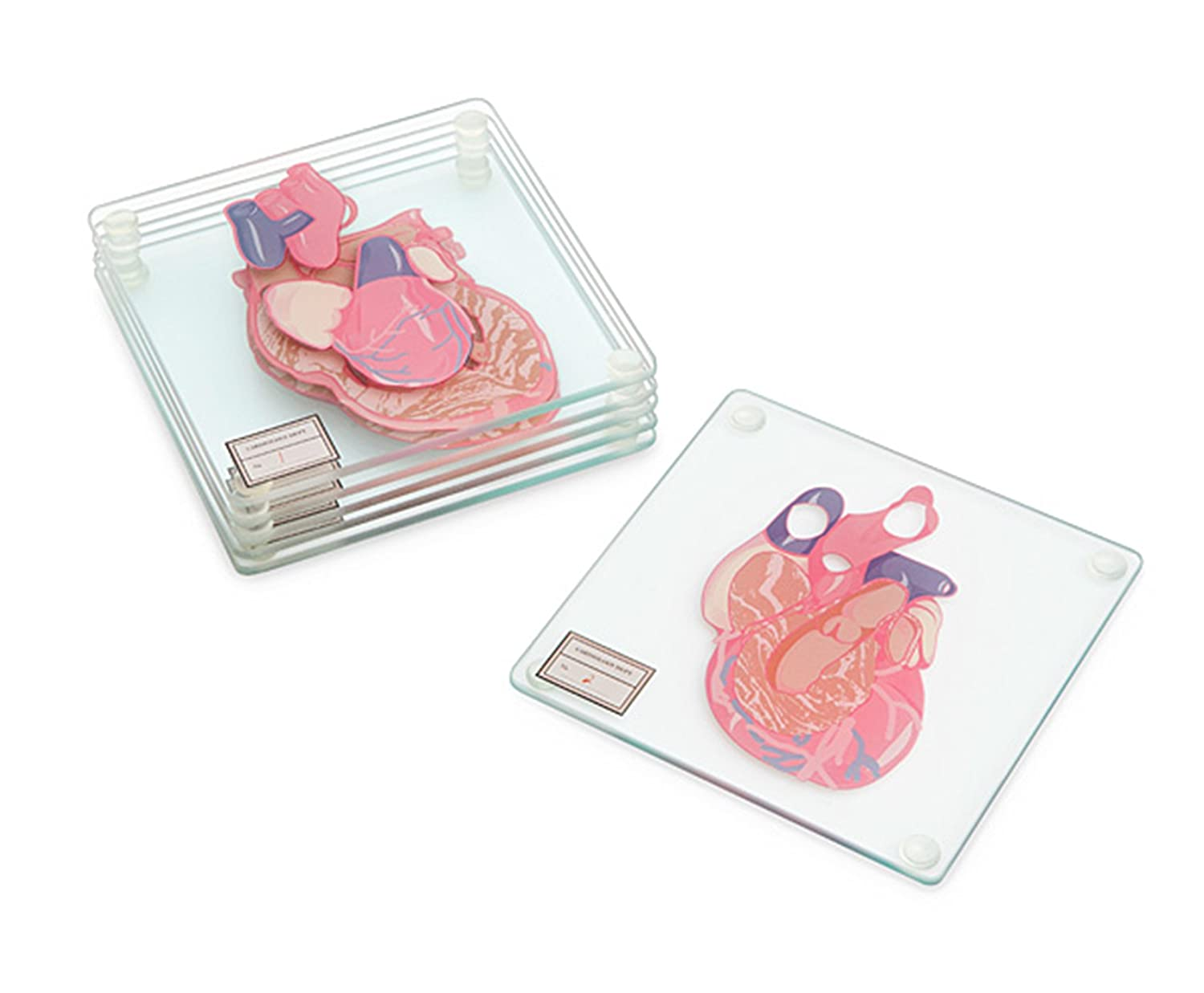 Amazon.com | Anatomic Heart Specimen 6-Piece Coaster Set: Coasters