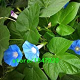Hot Selling Rare Blue Morning Glory Seeds Balcony Bonsai Flower Ipomoea Nil Flowers for DIY Home Garden 100PCS