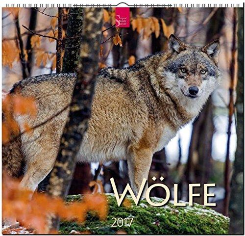 wlfe-original-strtz-kalender-2017-mittelformat-kalender-33-x-31-cm