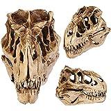 17years Résine Crafts dent de dinosaure Tête de mort Fossil enseignement Modèle de squelette Halloween Décor