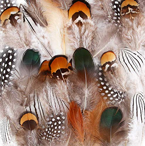 Feathers & Boas