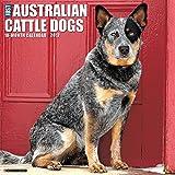 Just Australian Cattle Dogs 2017 Wall Calendar (Dog Breed Calendars)