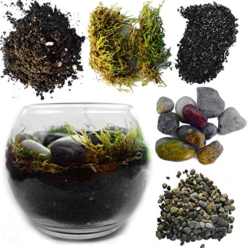 Complete Terrarium Kit: Succulent Planter With Soil and Glass Globe + All Supplies for Succulent, Cactus, and Fairy Garden (Glass Globe, Height 4 inches - Width 5 inches)