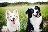 immune system booster for dogs - IMMUNE SUPPORT AND
