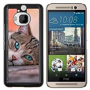 YiPhone /// Prima de resorte delgada de la cubierta del caso de Shell Armor - Cat House American Shorthair británico - HTC One M9Plus M9+ M9 Plus