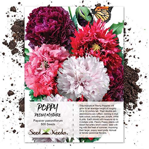 (Seed Needs, Peony Poppy Mixture (Papaver paeo.) 500 Seeds)