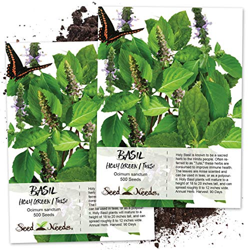 Seed Needs, Holy Basil / Tulsi Herb (Ocimum sanctum) Twin Pack of 500 Seeds Each ()