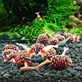 Image of Naturally Grown, Pesticide Free SunGrow Alder Cones (50 pcs) for Shrimps - Lowers pH level, Fight Bacteria and Prevent Fungal Infections in Aquatic Environment : Perfect for both big & small Aquariums