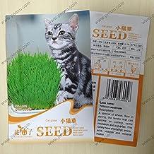 Catnip grass seeds, cat grass, 200 Seeds