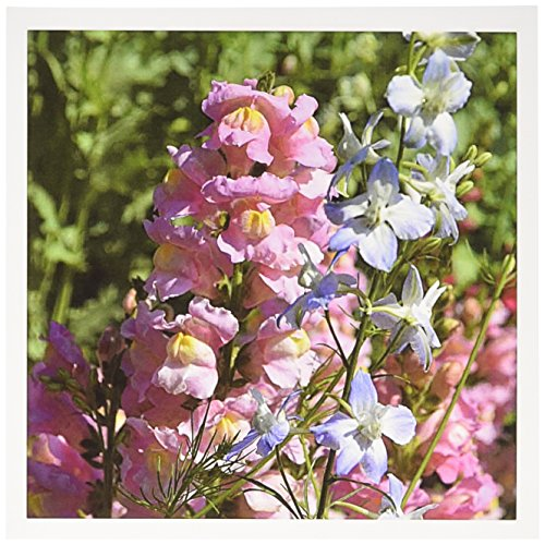 3dRose Photo with pink snapdragons and bluestar flowers - Greeting Cards, 6 x 6 inches, set of 12 (gc_129730_2) - Pink Snapdragons