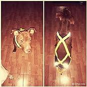 Neewa Pro, Sled Arnés, Amarillo, M: Amazon.es: Productos para mascotas