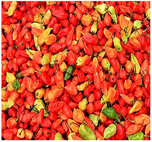 BIG PACK - (500) Bhut Jolokia, Ghost Pepper Seeds - 2007 as hottest chile pepper in the world at over 1 million Scoville unit- Non-GMO Seeds by MySeeds.Co (BIG PACK - Chile 2007