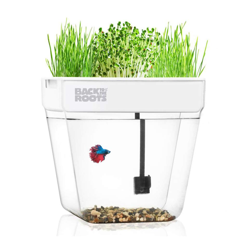 Back to the Roots Self Cleaning Aquaponic Betta Fish Tank Kit for Kids, with STEM Curriculum
