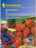 Erdbeeren Elan Pillensaat