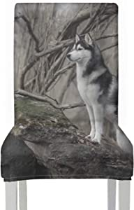 AQQA ChairCoverSeatCushion Siberian Naughty Husky StoolChairCovers Stretch Removable Washable SeatCoverforDiningChair for Home Kitchen Party Restaurant Wedding