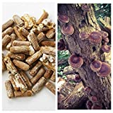 Kyпить Shiitake Mushrooms Mushroom Mycelium Plug Spawn - 100 Count Plugs - Grow Edible Gourmet & Medicinal Shitake Fungi On Trees & Logs на Amazon.com