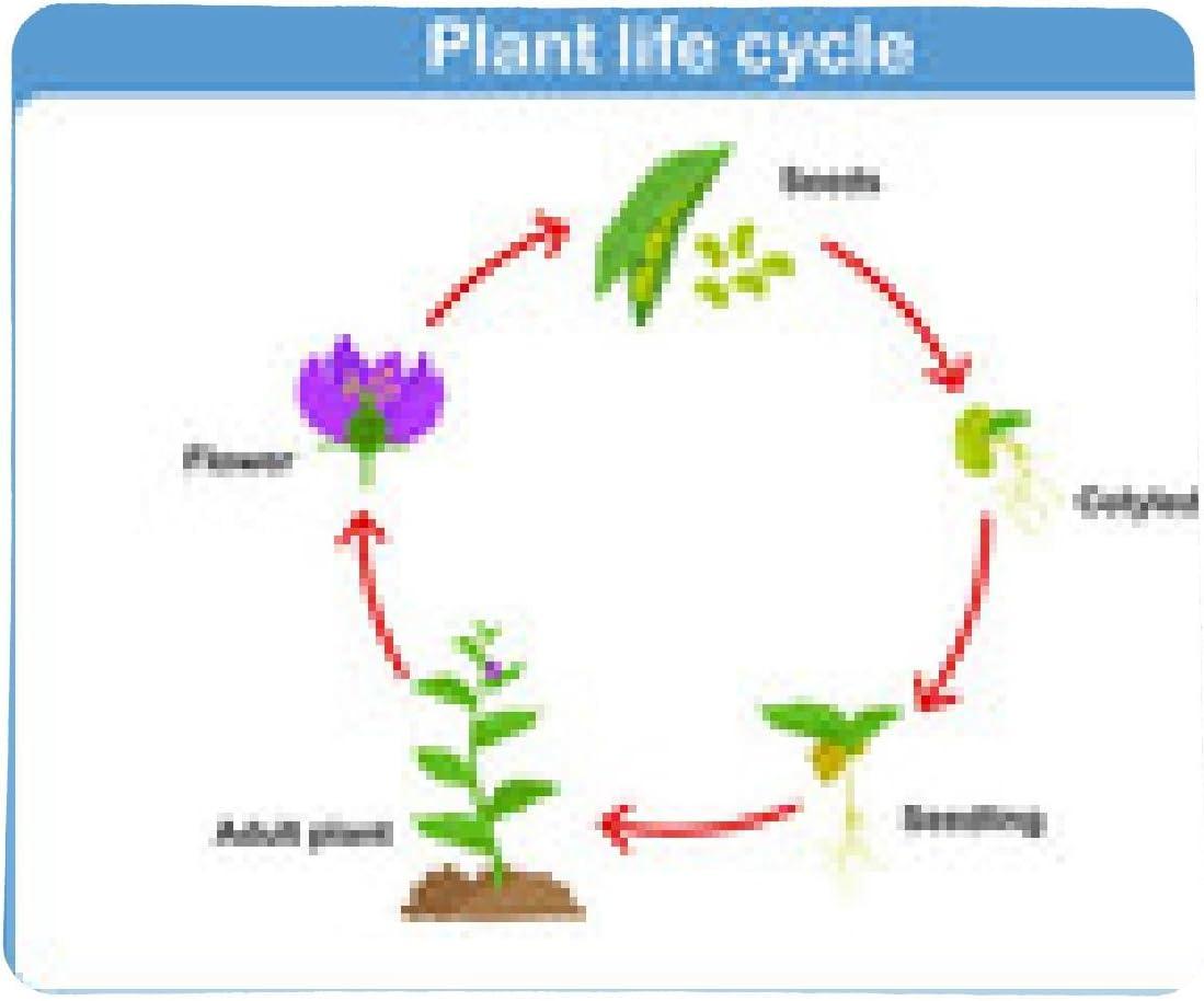 my-puzzle-design alfombrilla de ratón ciclo de vida del vector de una planta para los niños: Amazon.es: Electrónica