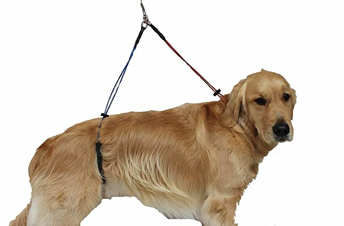614 5X6aKhL._SX681_ dog grooming harness dog grooming collar \u2022 wiring diagram database  at bayanpartner.co