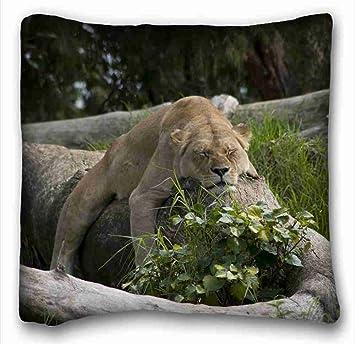 Amazon.com: Suave funda de cojín almohada (Animales alas de ...