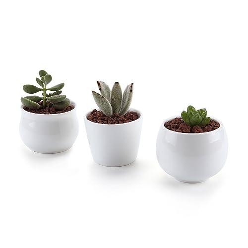 desk plants amazon co uk