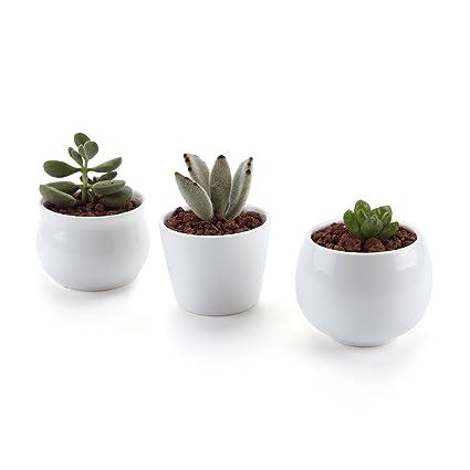 Amazon t4u 25275275 inch ceramic white collection no31 t4u 25275275 inch ceramic white collection no31 succulent plant pot mightylinksfo