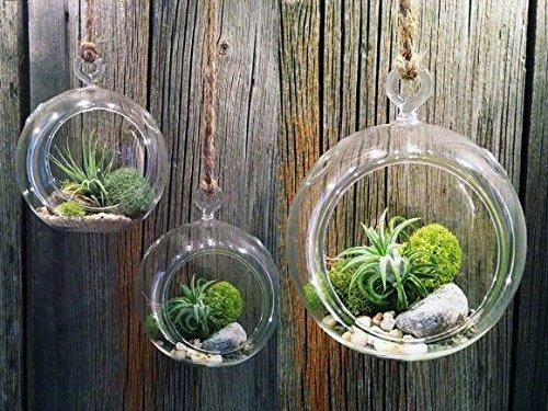 Chakil vetro palla appesa apertura Ball micro paesaggio ecologico bottiglia, Vetro, As Shown, 1pc-12cm