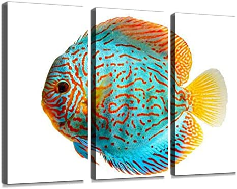 Discus Tropical Fish Abstract Watercolor Painting Art Print by Artist DJ Rogers