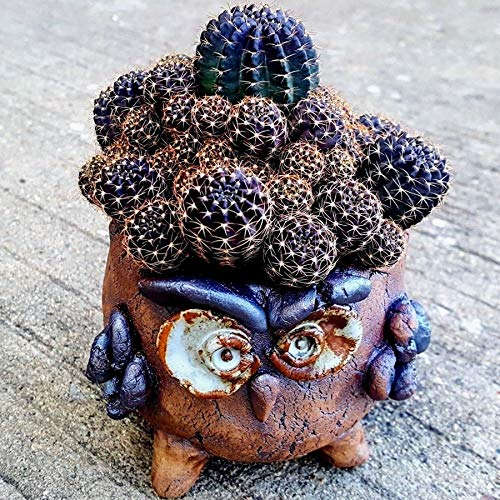 Littledream Unique Cute Owl Creative Succulent Planter Cactus Pot Flower Pot Bonsai Mini Vase Vintage Ceramic Handmade Pottery Container Gardening Garden Home Decor Special Gift ()